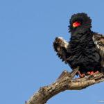 Cover–Kruger-Bird-Challenge-2019