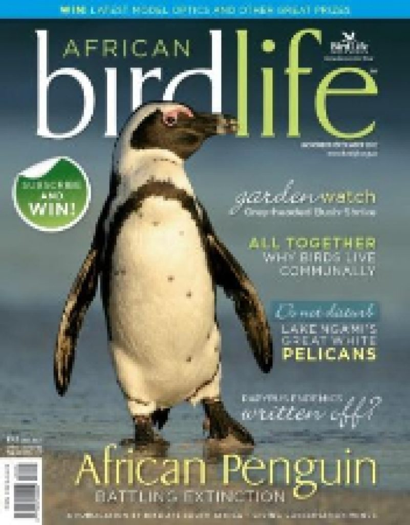African Birdlife Nov / Dec 2012