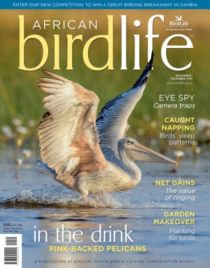 African Birdlife Nov / Dec 2016