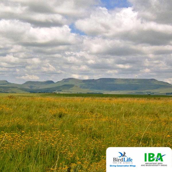 Grassland_IBA_video