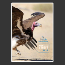 annual-report_2017
