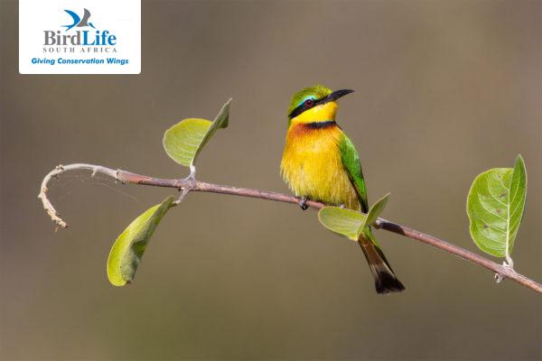 Home - BirdLife South Africa