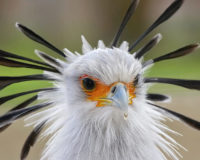 animals_hero_secretary_bird
