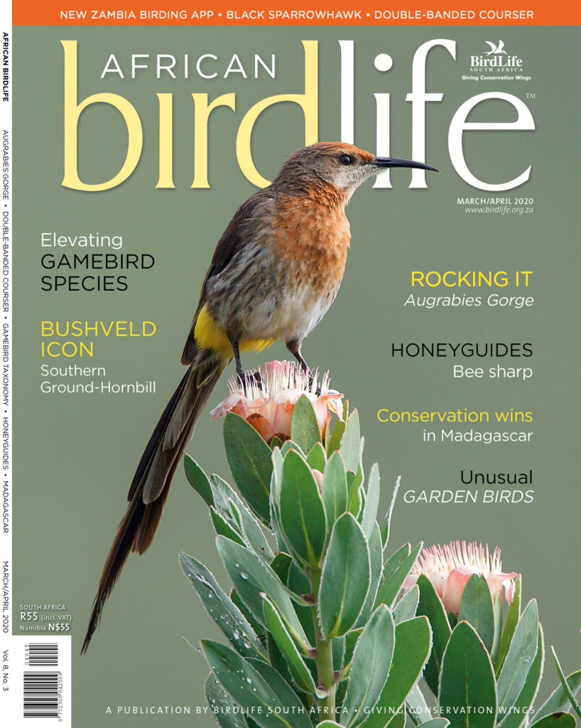 African Birdlife March/April 2020