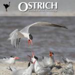 ostrich-cover-2021